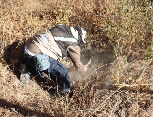 Localizan fosa clandestina en Luis Moya